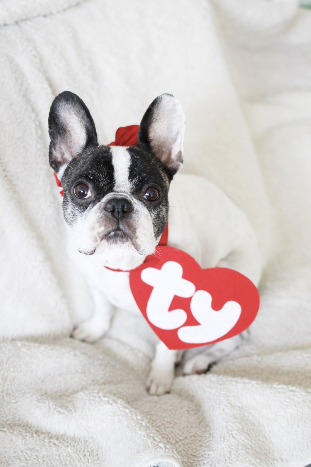 Beanie Baby Lily | A Married Adventure