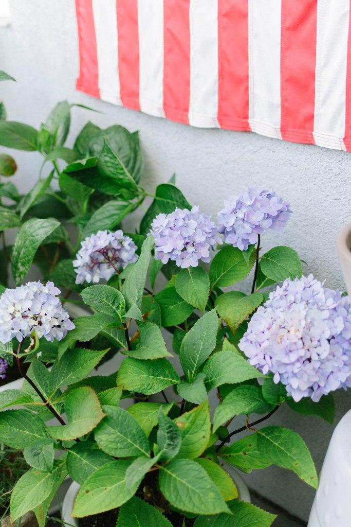 urban garden for summer