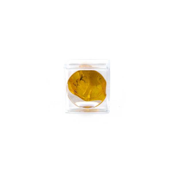 Small Plastic capsule containing Amber Piece with Super Inclusion