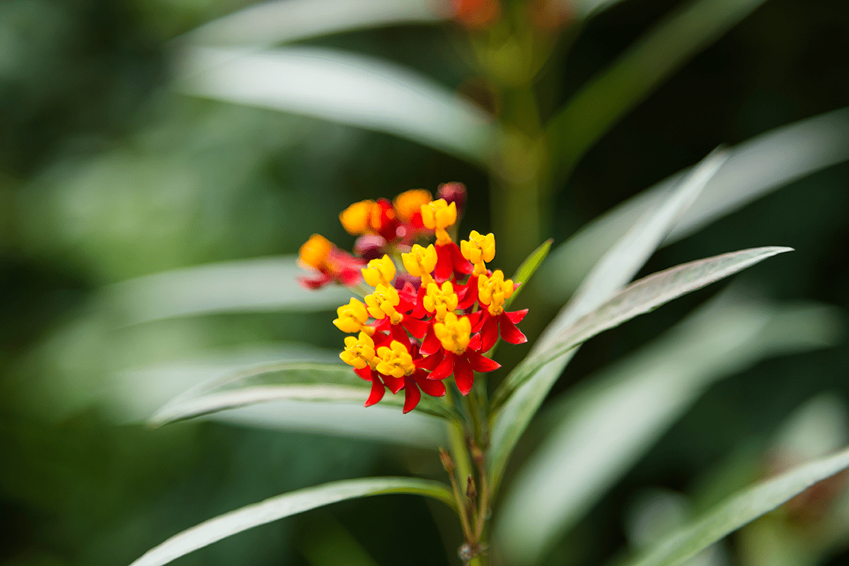 Little red and yellow flowers