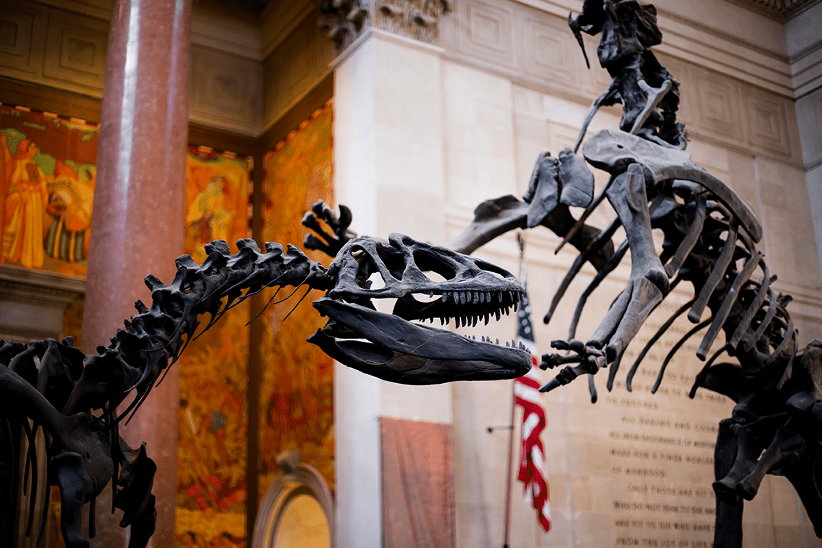 Beautiful photos of New York City February 2015 Museum of Natural History