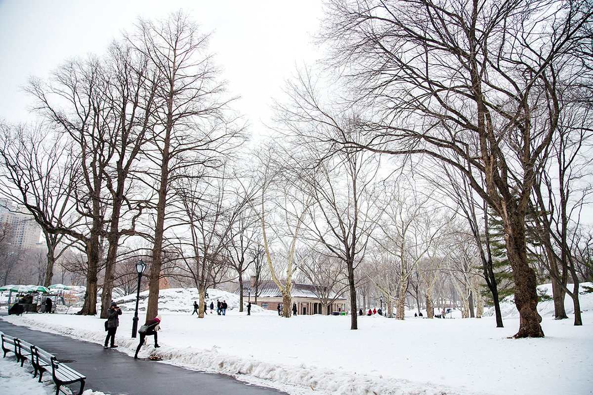 New York City february 2015 photo journal central park trees
