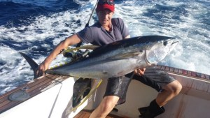 Yellowfin2-Web