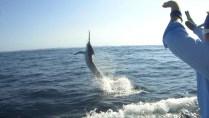 Billfish fishing sydney