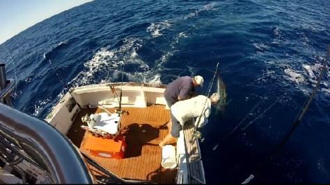 nelson bay fishing