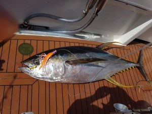 Yellowfin Tuna...