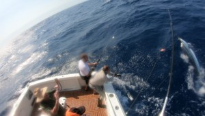 Striped Marlin Port Stephens