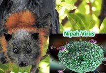 nipah-virus-640x381 png