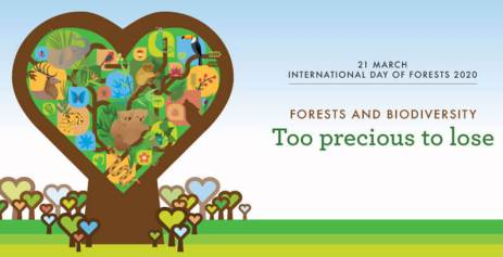 21st March: International Day of Forests 2020
