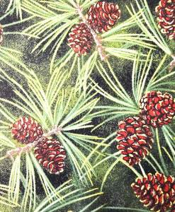 fchr009-pinecone-fabric