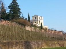 Vineyard below the Pompejanum