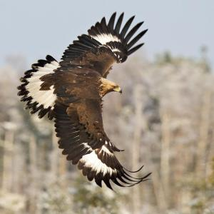 foto Golden Eagle Energy Healing