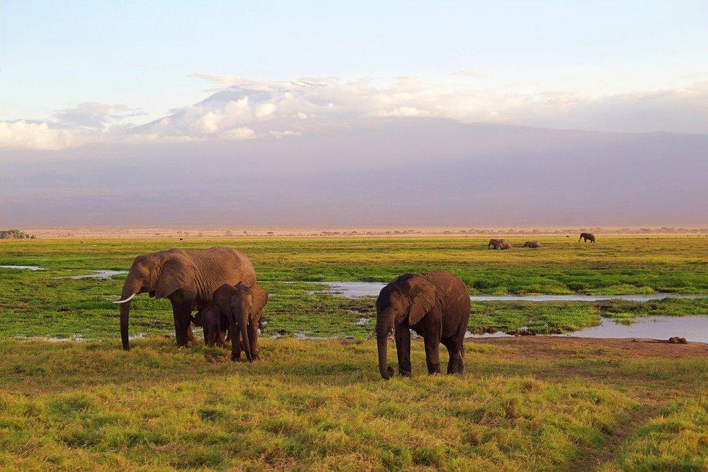 safari - kilimanjaro