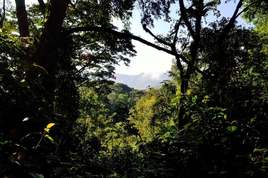uganda - bwindi-impenetrable-forest