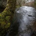 Play-Farm-stream-Oregon