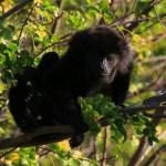 nicaragua-yoga-retreat-wildlife-highlands-nicaragua