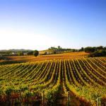 bordeaux-wine-yoga-womens-retreat-france-luxury
