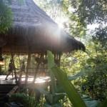 bali-yoga-retreat-jungle