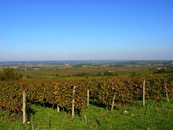 monbazillac-vinyard-yoga-wine-retreat-france