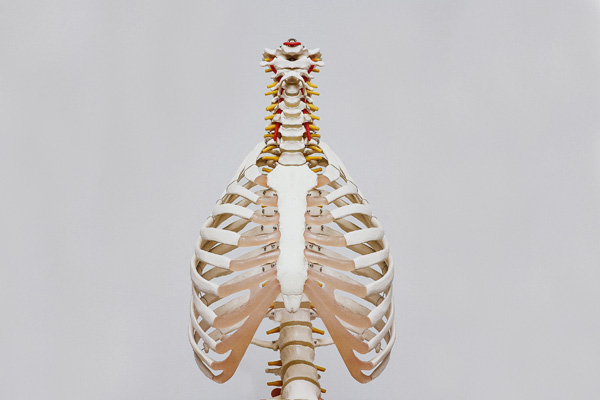 yoga-teacher-training-course-anatomy