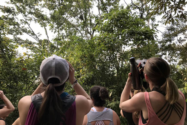 affordable yoga retreat nicaragua march 2019 sloth sighting