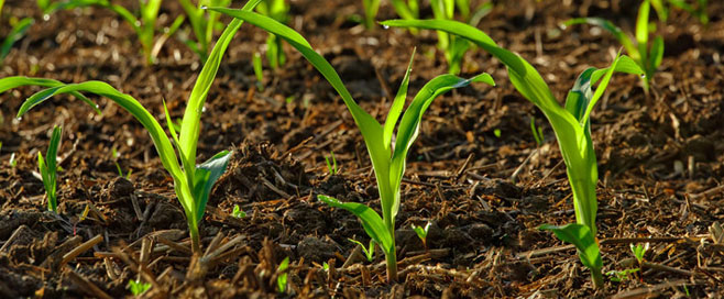Image result for chemical fertilizers
