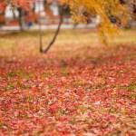 新宿御苑の紅葉の2018年の見ごろと混雑状況!都内の紅葉の名所に足を運ぼう