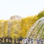 国営昭和記念公園 2014東京紅葉名所 見頃、おすすめ情報 コスモスまつり