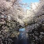 目黒川の花見2018桜の見所と見頃!ライトアップの期間や中目黒桜まつり、お花見クルーズを紹介