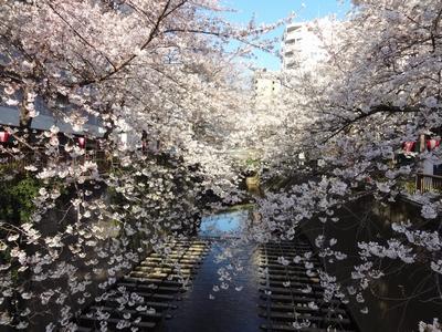 目黒川の花見2020桜の見所と見頃!ライトアップの期間や中目黒桜まつり、お花見クルーズを紹介