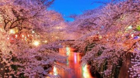 目黒側 桜 ライトアップ