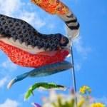 鯉のぼりの由来と飾る時期はいつからいつまで、そして何歳まで?