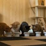 猫の多頭飼いは難しい?先住猫と相性が悪い時の対処方法
