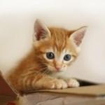 『猫のしつけ』しつけの前にも家族で必要な事があります。知っておきたいしつけのポイントをご紹介