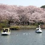 洗足池公園での桜の見どころや見頃、混雑、屋台情報、洗足池桜まつりについて