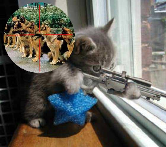 https://i1.wp.com/amcop.blogspot.com/Sniper%20kitten.jpg