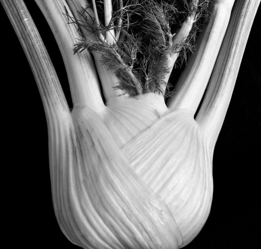 The Alphabeth of Plants, Karl Blossfeldt, livres, plantes, âme bordeaux, art