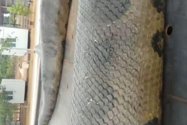 giant-anaconda-found-in-brazil-1