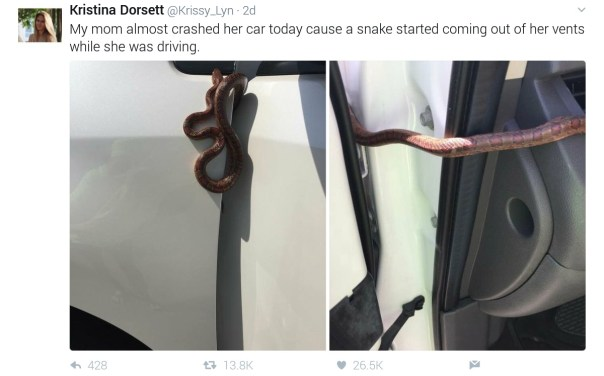 Snake That Crept Out Of Someone's Mum's Car While She Was Driving, Snake, Kristina Dorsett, Kristina Dorsett Narrates How Snake Crept Out Of Mum's Car While She Was Driving,
