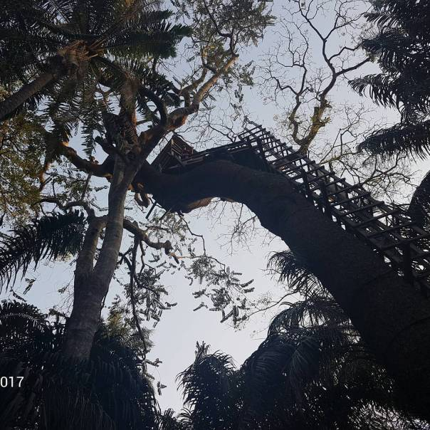 Moyo Lawal Discloses How She Climbed A Tree House And Nearly Slipped Twice (3)