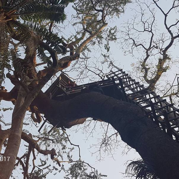 Moyo Lawal Discloses How She Climbed A Tree House And Nearly Slipped Twice (4)