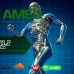 Podcast 383 AMED – 3 Sistemas De Metabolismo Energetico