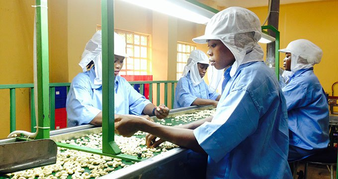 FG to earn 1.7 billion dollars from cashew production- Minister