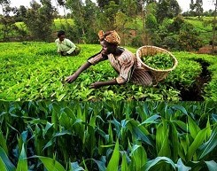 How farmers can benefit from this $1.5 million agric grant