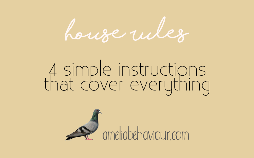 House Rules: 4 simple instructions that cover everything