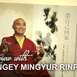 happiness according to Mingyur Rinpoche