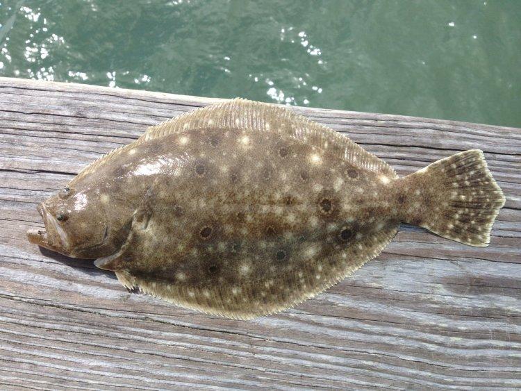 Amelia Island Fishing Reports 3