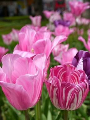 Colour Sample photos 27 sm