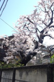 Shimoochiai - jardin privé