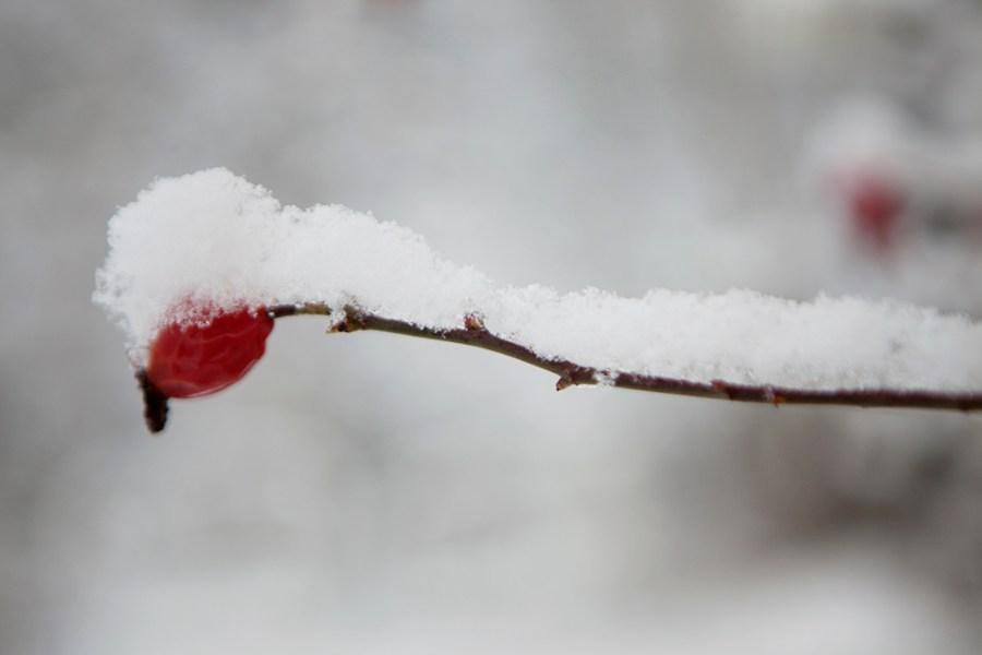 Vinter-3L